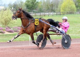 SWEDISHMAN (Thierry Duvaldestin)